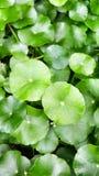 Grüner Hintergrund Stockbilder