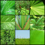 Grüner Hintergrund der Natur Lizenzfreie Stockbilder