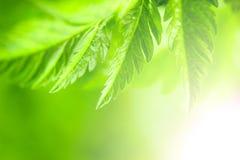 Grüner Hintergrund der Natur Lizenzfreie Stockfotos