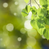 Grüner Hintergrund 02 der Natur Lizenzfreie Stockfotografie