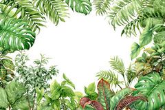 Grüner Hintergrund des Aquarells mit tropischen Anlagen vektor abbildung