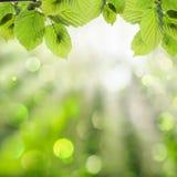 Grüner Hintergrund des Frühlinges Stockfotos