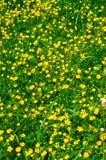 Grüner Hintergrund des Grases lizenzfreie stockfotos