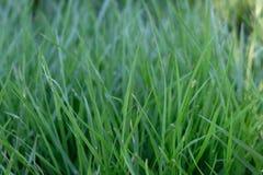 Grüner Hintergrund durch das frische Gras stockbild