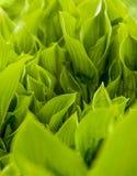 Grüner Hintergrund Helles klares Frühlingskraut Lizenzfreies Stockbild