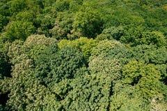 Grüner Hintergrund laubwechselnder Forest Top View Aerial View-Landschaft Stockbild