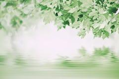Grüner Hintergrund mit Ahorn Stockfotos