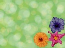 Grüner Hintergrund mit bokeh Effekt und einer Blumenecke stockfotos