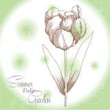 Grüner Hintergrund mit einer Tulpe Stockfotos