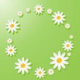 Grüner Hintergrund mit Kamille Lizenzfreie Stockfotos