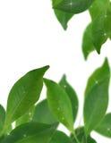 Grüner Hintergrund mit selektivem Fokus Stockbild