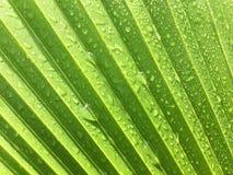 Grüner Hintergrund mit Wassertropfen Stockbild