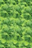 Grüner Hintergrund, tadellose Blätter Stockbild