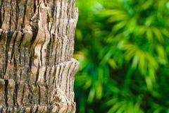 Grüner Hintergrund- und Kokosnussbaum Lizenzfreies Stockbild