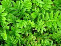 Grüner Hintergrund von den Blättern Lizenzfreie Stockfotografie