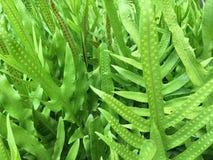 Grüner Hintergrund von Farnen Lizenzfreies Stockfoto