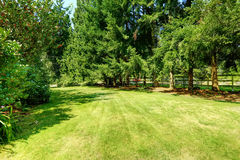 Grüner Hinterhof Apple entspringen Garten Stockfotografie