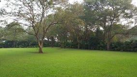 Grüner Hinterhof eines Hauses Lizenzfreie Stockfotos