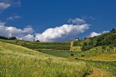 Grüner idyllischer Hügel des Frühjahrs mit Weinberg Lizenzfreie Stockbilder