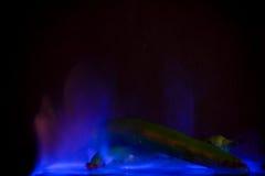 Grüner Jalapeno im blauen Feuer Stockfotografie