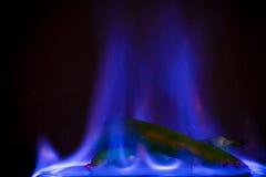 Grüner Jalapeno im blauen Feuer Lizenzfreie Stockfotos