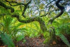 Grüner japanischer Ahornbaum Lizenzfreie Stockfotos