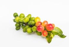 Grüner Kaffee Stockbilder