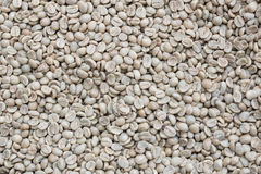 Grüner Kaffeebohnehintergrund Lizenzfreies Stockfoto
