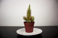 Grüner Kaktus Lizenzfreie Stockfotos