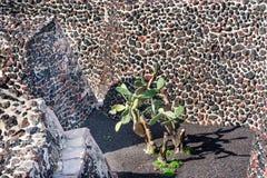 Grüner Kaktus-alter Wand-Azteke Templo Bürgermeister Mexiko City Mexiko stockbilder