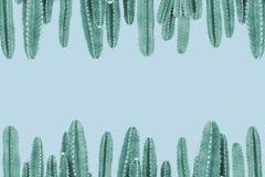 Grüner Kaktus auf blauem Hintergrund Stockfotos