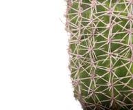 Grüner Kaktus in einem braunen Topf auf rosa Hintergrund Minimales Artdesign Dornen, grob Lizenzfreies Stockbild