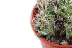 Grüner Kaktus in einem braunen Topf auf rosa Hintergrund Minimales Artdesign Dornen, grob Lizenzfreie Stockbilder