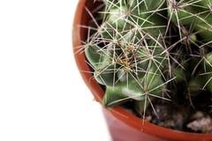 Grüner Kaktus in einem braunen Topf auf rosa Hintergrund Minimales Artdesign Dornen, grob Stockfotografie