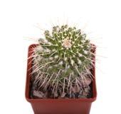 Grüner Kaktus in einem braunen Topf auf rosa Hintergrund Minimales Artdesign Dornen, grob Stockbilder