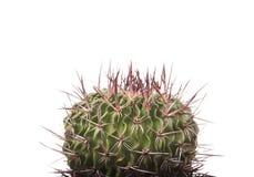 Grüner Kaktus in einem braunen Topf auf rosa Hintergrund Minimales Artdesign Dornen, grob Stockfoto