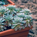 Grüner Kaktus eingemacht auf rustikalem Steinhintergrund Getonte Weinlese Lizenzfreie Stockbilder
