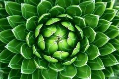 Grüner Kaktus Hintergrund Lizenzfreies Stockbild