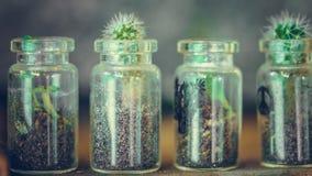 Grüner Kaktus im Glastopf lizenzfreie stockbilder