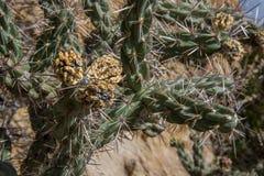 Grüner Kaktus mit gelben Tipps Lizenzfreies Stockbild