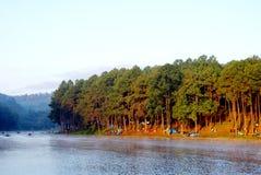 Grüner Kiefernwald mit dem Kampieren des Touristen nahe dem See mit Nebel über dem Wasser morgens, Schmerzgefühl oung Maehongson- stockfoto