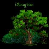 Grüner Kirschbaum lokalisiert auf schwarzem Hintergrund lizenzfreie abbildung