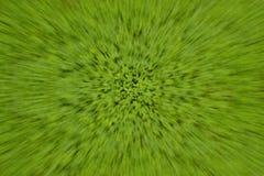 Grüner Klee in der Zoombewegung Lizenzfreie Stockfotografie