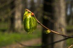 Grüner Kleinbogen auf dem Baum lizenzfreies stockfoto