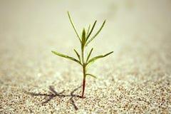 Grüner Knospesprößling im Sand Stockfotografie