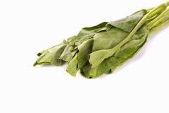 Grüner Kohl auf weißem Hintergrund Stockfotos