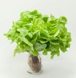 Grüner Kopfsalat auf einem weißen Hintergrund Stockfotografie