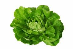 Grüner Kopfsalat getrennt über Weiß Stockfotografie