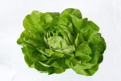 Grüner Kopfsalat getrennt Stockfoto