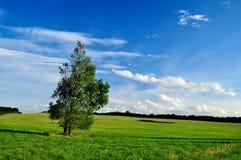 Grüner Landschaftshintergrund Stockbild